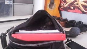 Kat in een schooltas Stock Afbeelding