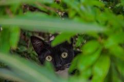 Kat in een struik royalty-vrije stock afbeelding