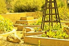 Kat in een tuin Royalty-vrije Stock Foto's