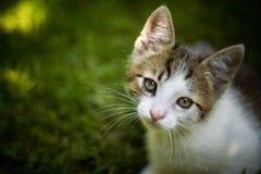 Kat in een tuin Royalty-vrije Stock Afbeelding