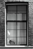 Kat in een venster Stock Foto