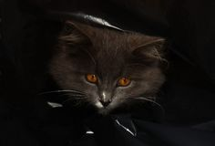 Kat in een zak Stock Afbeeldingen