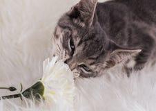 Kat en bloem Stock Fotografie
