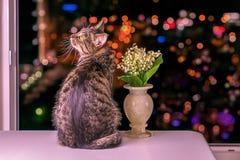 Kat en bloemen royalty-vrije stock afbeelding