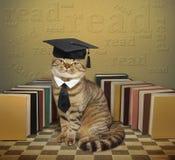 Kat en boeken royalty-vrije stock afbeeldingen