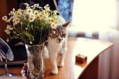 Kat en camomiles Stock Foto