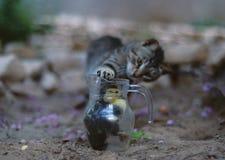 Kat en de eend royalty-vrije stock afbeeldingen