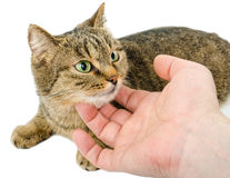 Kat en de hand stock afbeeldingen