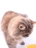 Kat en de helft van citroen Stock Fotografie