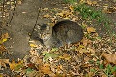 Kat en de herfst stock afbeeldingen