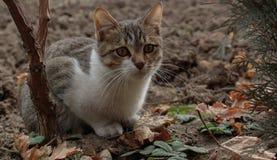 Kat en de herfst Royalty-vrije Stock Foto