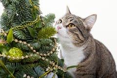 Kat en de Kerstboom Royalty-vrije Stock Afbeelding