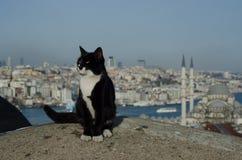 Kat en de stad Royalty-vrije Stock Foto's
