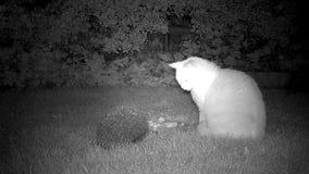 Kat en Egel in tuin stock video
