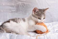 Kat en Garen Stock Afbeelding