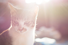 Kat en gloedlicht vage achtergrond Royalty-vrije Stock Foto