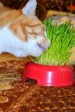 Kat en gras Royalty-vrije Stock Foto's