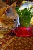 Kat en gras Stock Foto