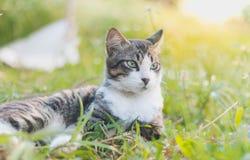 Kat en gras stock afbeelding