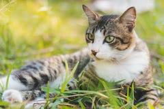 Kat en gras Stock Afbeeldingen
