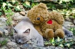 Kat en haar beste vriend Royalty-vrije Stock Afbeeldingen