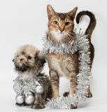 Kat en het puppy stock afbeeldingen