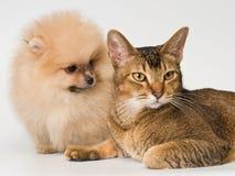 Kat en het puppy van de spitz-hond stock foto