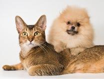 Kat en het puppy van de spitz-hond royalty-vrije stock foto
