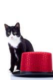 Kat en hoed stock afbeelding