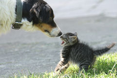 Kat en hond Stock Fotografie