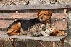 Kat en hond Stock Afbeelding