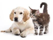 Kat en hond Stock Foto's