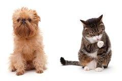 Kat en hond Royalty-vrije Stock Foto's