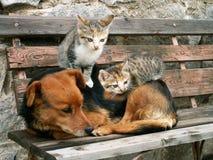 Kat en hond Royalty-vrije Stock Foto