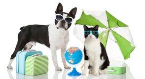 Kat en hond bij vakantie Royalty-vrije Stock Afbeelding