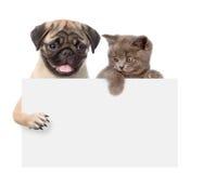 Kat en hond boven witte banner Geïsoleerdj op witte achtergrond royalty-vrije stock foto