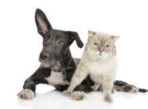 Kat en hond die camera bekijken. stock afbeelding