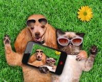Kat en hond die een selfie nemen royalty-vrije stock afbeelding