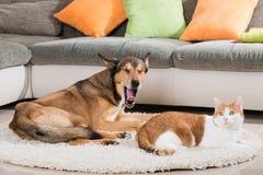 Kat en hond die in een woonkamer liggen Royalty-vrije Stock Foto