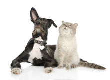 Kat en hond die omhoog eruit zien. Royalty-vrije Stock Afbeeldingen
