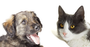 Kat en hond die omhoog eruit zien Stock Afbeeldingen