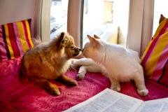 Kat en hond die op het venster leggen Royalty-vrije Stock Afbeeldingen