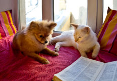 Kat en hond die op het venster leggen Stock Foto