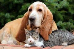 Kat en hond die samen rusten Royalty-vrije Stock Foto's