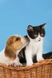 Kat en hond in een mand Stock Afbeeldingen