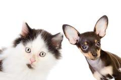 Kat en hond het kijken en camera Stock Foto's