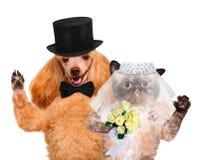 Kat en hond Huwelijk stock afbeeldingen