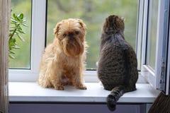 Kat en hond op het venster Royalty-vrije Stock Foto