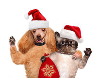 Kat en hond in rode Kerstmishoeden Royalty-vrije Stock Afbeeldingen