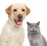 Kat en hond samen Royalty-vrije Stock Fotografie